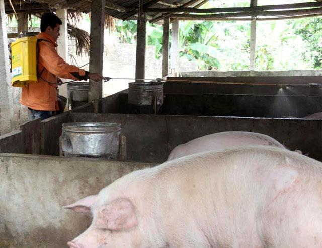 Lực lượng chức năng xã Đông Cuông, huyện Văn Yên phun tiêu độc, khử trùng chuồng trại chăn nuôi lợn.