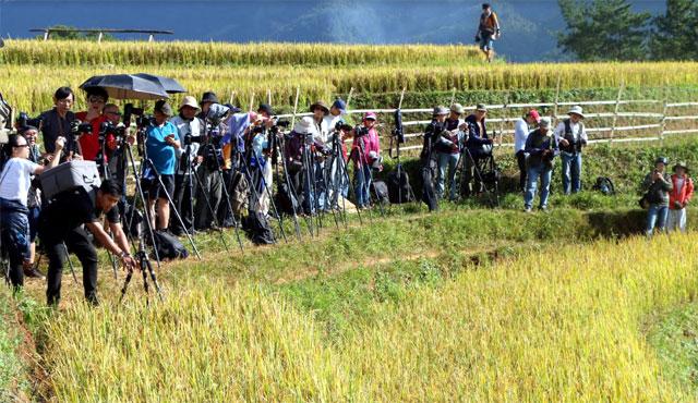 Các nghệ sỹ nhiếp ảnh sáng tác tại Danh thắng quốc gia Ruộng bậc thang Mù Cang Chải.