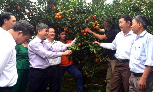 Đồng chí Chu Đình Ngữ - Bí thư Huyện ủy Văn Chấn thăm mô hình trồng cam tại xã Bình Thuận.