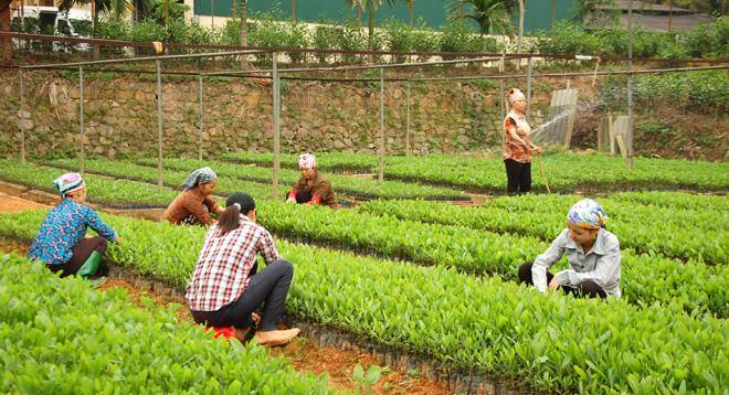 Các vườn ươm chuẩn bị cây giống cho vụ trồng rừng mùa xuân. Ảnh MQ