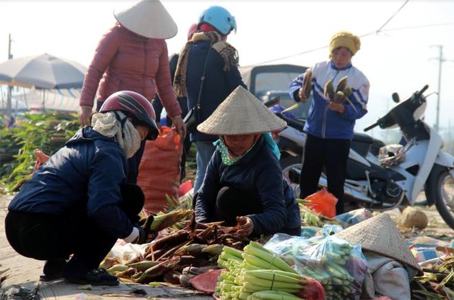 Ngô hàng hóa của người dân vùng cánh đồng Mường Lò (Văn Chấn) hiện được người dùng ưa chuộng.