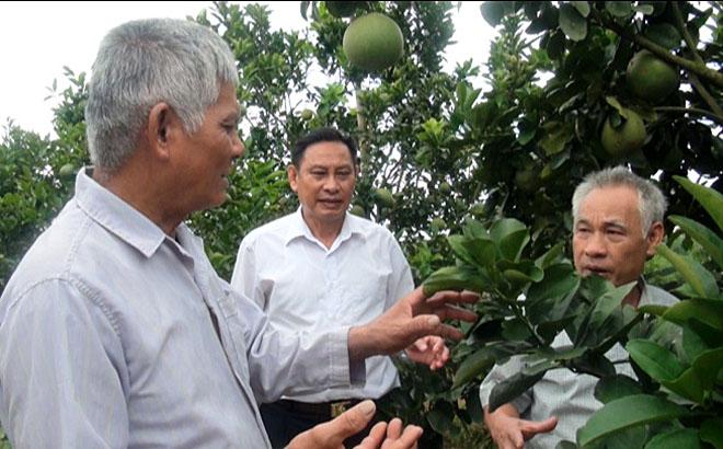 Cựu chiến binh Phạm Văn Hùng, xã Đại Minh, huyện Yên Bình (bên trái) chia sẻ kinh nghiệm trồng bưởi với đồng đội.