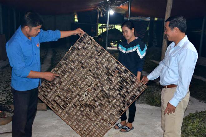 Mở rộng thêm trồng dâu nuôi tằm, tương lai Hà Đức Ngà trở thành hộ đạt sản lượng kén cao nhất huyện Trấn Yên.