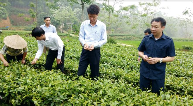 Đồng chí Vũ Quỳnh Khánh - Ủy viên Ban Thường vụ, Chủ nhiệm Ủy ban Kiểm tra Tỉnh ủy (bên phải) thăm vùng chè Bát Tiên ở xã Bảo Hưng, huyện Trấn Yên.