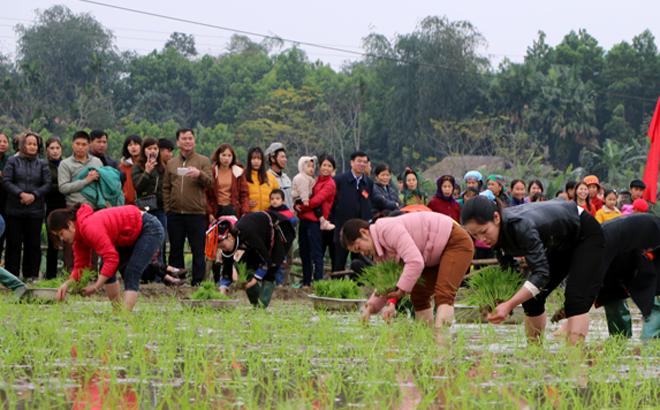 Bà con nhân dân các xã cụm đường 7 tham gia thi cấy lúa nhanh
