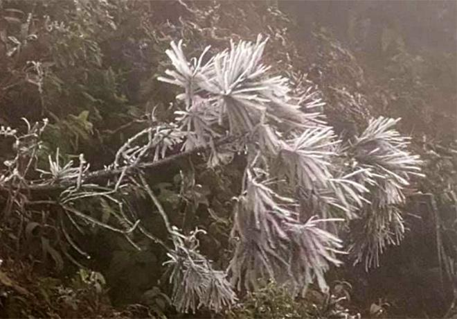 Sáng 9/1, tại đỉnh đèo Khau Phạ, huyện Mù Cang Chải (Yên Bái), cây cối đã được nhuộm một màu trắng của băng tuyết. (Ảnh: Đình Nguyên)