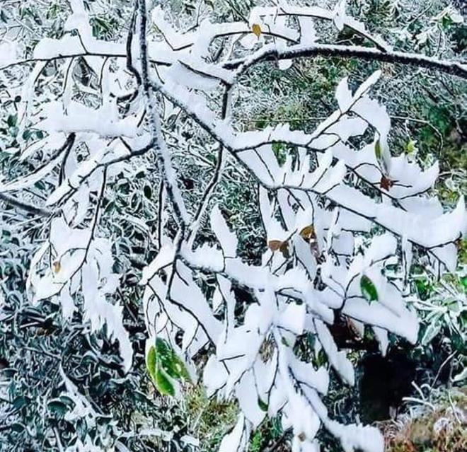 Từ sáng 9/1, băng giá đã xuất hiện ở nhiều đỉnh núi cao của huyện Mù Cang Chải.
