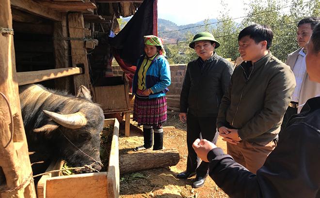 Lãnh đạo Chi cục Chăn nuôi - Thú y tỉnh và Phòng Nông nghiệp- Phát triển nông thôn huyện Mù Cang Chải kiểm tra công tác phòng, chống rét cho đàn gia súc tại thôn Púng Luông, xã Púng Luông, huyện Mù Cang Chải