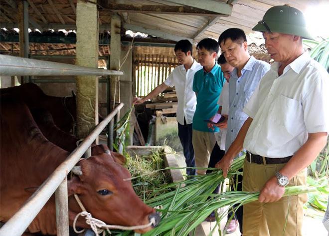 Ông Hoàng Xuân Long - Phó Chủ tịch Thường trực Hội Nông dân tỉnh (thứ 2, bên phải) thăm mô hình chăn nuôi bò hiệu quả từ nguồn vay Quỹ HTND tại xã Vĩnh Kiên, huyện Yên Bình.