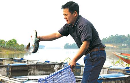 Nghề nuôi cá lồng trên hồ mang lại thu nhập cao cho gia đình anh Phạm Văn Định, thôn Đồng Tanh, xã Phúc An.