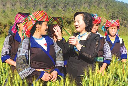 Đồng chí Phạm Thị Thanh Trà - Ủy viên Ban Chấp hành Trung ương Đảng, Bí thư Tỉnh ủy, Chủ tịch HĐND tỉnh thăm mô hình trồng lúa mì tại xã Púng Luông, huyện Mù Cang Chải.