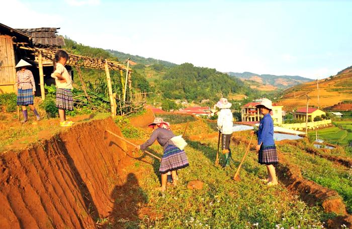Người dân huyện Mù Cang Chải vào vụ mới.