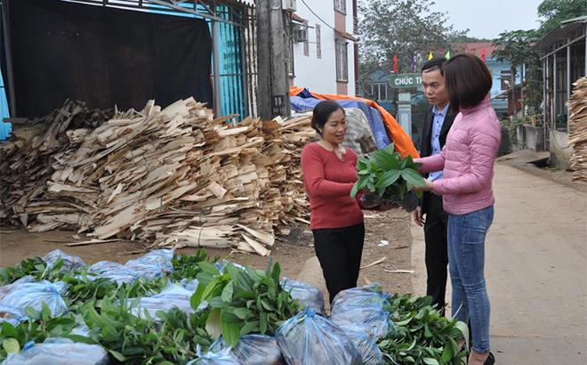 Mô hình phát triển kinh tế của đảng viên Đinh Thị Trang, xã Báo Đáp mang lại hiệu quả cao.