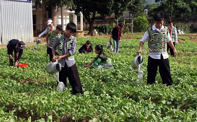 Học sinh Trường PTDTNT THCS huyện Văn Chấn chăm sóc vườn rau góp phần cung cấp thực phẩm sạch trong các bữa ăn.