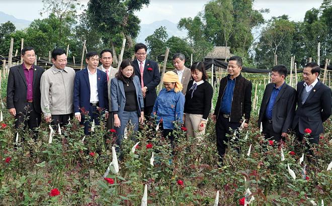 Các đồng chí lãnh đạo Thị ủy, HĐND, UBND thị xã Nghĩa Lộ kiểm tra tình hình sản xuất và tham quan mô hình phát triển kinh tế từ trồng hoa tại tổ Cang Nà, phường Trung Tâm.