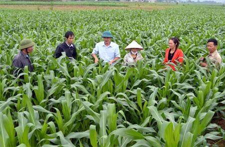 Lãnh đạo xã Yên Phú (Văn Yên) trao đổi với nhân dân về việc phát triển cây ngô vụ đông trên đất 2 vụ lúa.