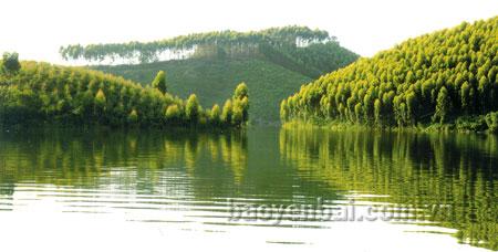 Rừng trồng trên đảo hồ Thác Bà. (Ảnh: Thanh Miền)