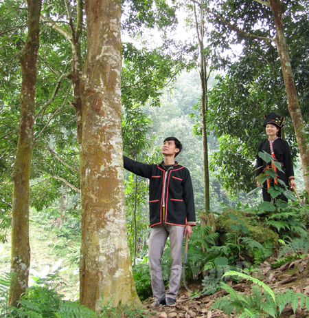 Vợ chồng đoàn viên Lý Phú Nhất bên đồi quế gia đình.