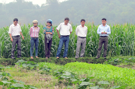 Đại biểu HĐND thị xã Nghĩa Lộ và lãnh đạo xã Nghĩa Phúc kiểm tra tình hình sản xuất nông nghiệp ở cơ sở.