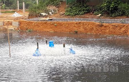 Toàn bộ nước thải của khu chăn nuôi của Doanh nghiệp Tân Thịnh đều đổ ra hồ thủy lợi Đồng Chuổm.