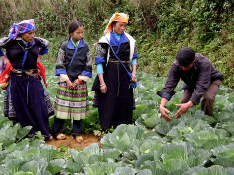 Cán bộ ngành nông nghiệp và phát triển nông thôn hướng dẫn đồng bào vùng cao trồng rau màu vụ đông.