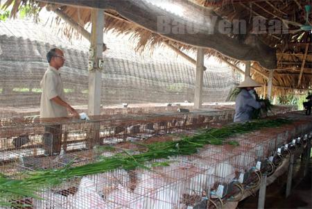 Trại thỏ của ông Vũ Huy Quang mang lại hiệu quả kinh tế cao.