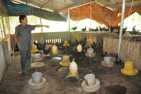 Phát triển các gia trại chăn nuôi theo hướng sản xuất hàng hóa được coi là thế mạnh của xã An Bình trong những năm trở lại đây.