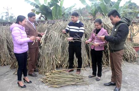 Cán bộ xã Việt Thành cùng nhân dân kiểm tra chất lượng giống cây dâu tằm.