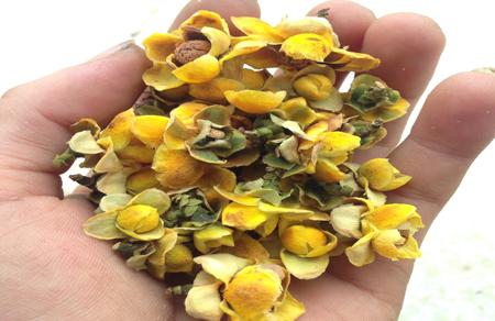 Trà hoa vàng sau khi sấy khô được anh Trương Văn Thương bán với giá 6 triệu đồng/kg, rẻ hơn một nửa so với giá thị trường.