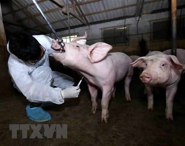 Nhân viên thú y tổ chức lấy mẫu để xét nghiệm tại hộ Đào Thị Thắng ở thôn Bó Khê, xã Tân Tiến, huyện Văn Giang, Hưng Yên.