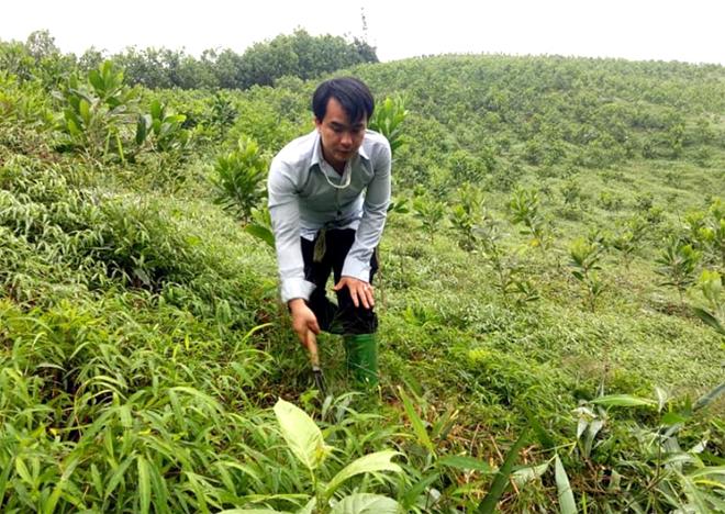 Anh Triệu Hoài Thương chăm sóc đồi cây.