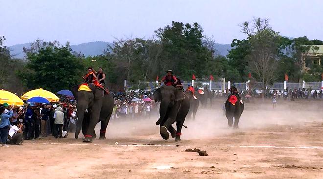 Các chú voi trên đường đua tại Hội voi lần này