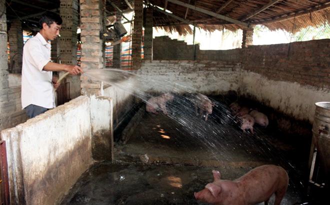 Anh Hoàng Văn Kiên ở thôn Thanh Hùng, xã Tân Thịnh, thành phố Yên Bái thường xuyên vệ sinh khu vực chăn nuôi.