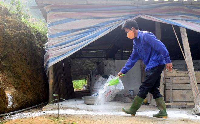 Ông Nguyễn Quốc Việt rắc vôi bột xung quanh chuồng lợn.