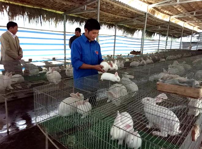 Phạm Hải Chiều đang chăm sóc thỏ.