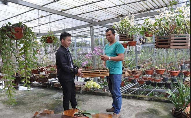 Mô hình trồng phong lan của anh Lò Văn Dũng, thôn Bản Xa, xã Nghĩa Lợi mang lại hiệu quả cao.