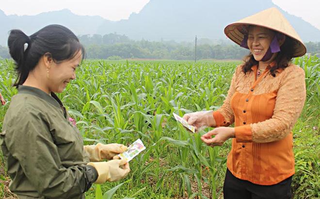 Lãnh đạo Trung tâm dịch vụ hỗ trợ phát triển nông nghiệp huyện hướng dẫn nông dân phòng chống sâu keo mùa thu.