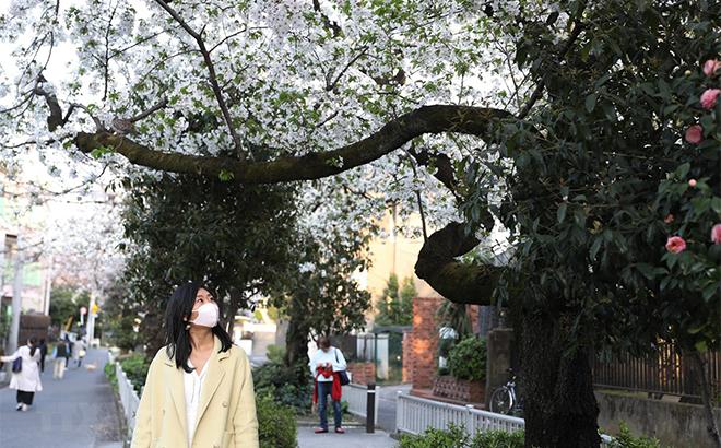Người dân đeo khẩu trang phòng lây nhiễm COVID-19 tại Tokyo, Nhật Bản, ngày 22/3.