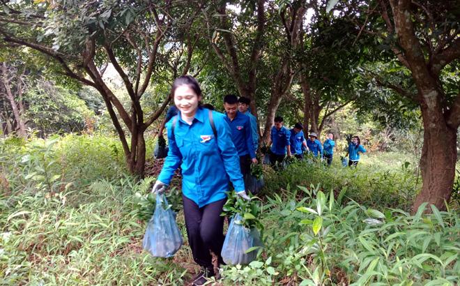 Đoàn viên thanh niên Nghĩa Lộ vận chuyển cây giống.