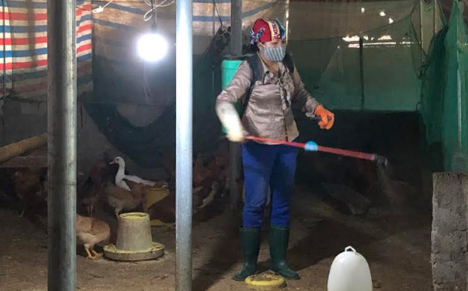 Poultry farmers have conducted regular fumigation of farming areas in order to prevent diseases on animals.