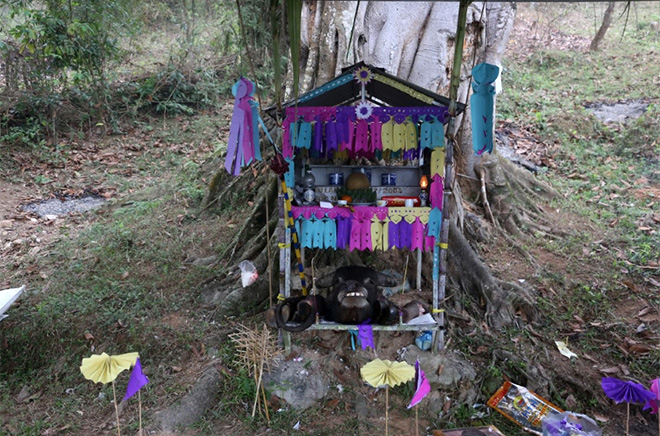 Xen Dong Festival is traditionally held under a hundreds-year-old banyan tree with thoroughly-prepared rituals.