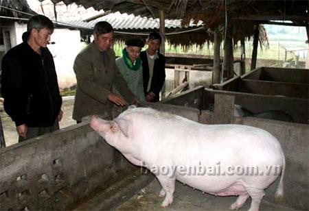Hội viên Hội Cựu chiến binh xã Tô Mậu thăm quan, học tập kinh nghiệm phát triển chăn nuôi hàng hóa.