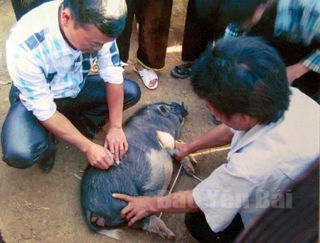 Học viên thực hành trong chương trình học nghề chăn nuôi - thú y.