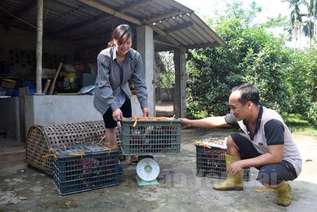Hai vợ chồng anh Nguyễn Ngọc Linh cân gà trước khi đi giao cho nhà hàng.