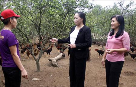 Chị Thủy (người đứng giữa) thăm mô hình phát triển kinh tế của gia đình hội viên phụ nữ thôn 3, thị trấn Cổ Phúc, huyện Trấn Yên.