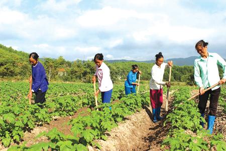 Mô hình trồng khoai tây vụ đông xuân cho thu 60 triệu đồng/ha (ảnh minh họa).
