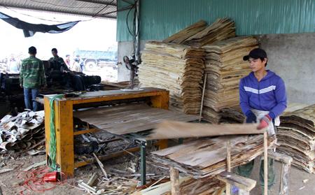 Phát triển trồng rừng gắn với chế biến gỗ đã mang lại hiệu quả kinh tế cao cho nhiều địa phương huyện Trấn Yên. (ảnh minh hoạ)
