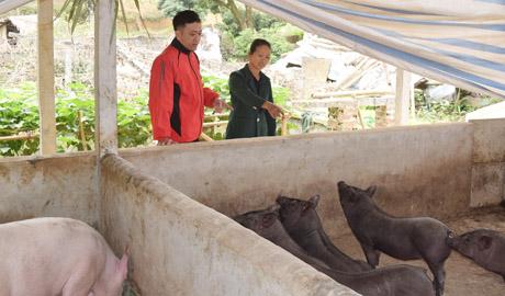 Hộ bà Phan Thị Đổi đang tiếp tục mở rộng quy mô chuồng trại chăn nuôi lợn và tập trung đầu tư vào lợn nái