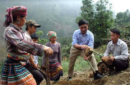 Bí thư Đảng ủy xã Hồng Ca - Hà Ngọc Toanh hướng dẫn người dân trồng tre măng Bát độ.