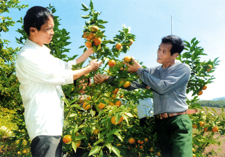 Đổi mới các hình thức tổ chức sản xuất như nhóm nông trại, gia trại, tổ hợp tác là hướng đi để phát triển chuỗi giá trị sản phẩm nông nghiệp. (Ảnh minh hoạ)